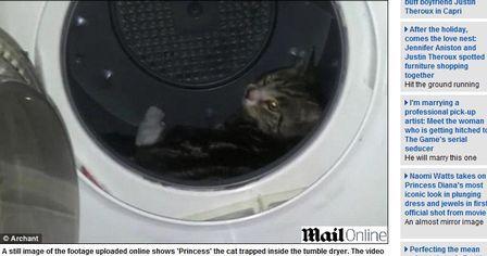 Homem coloca gato de estimação em secadora e publica o vídeo na internet