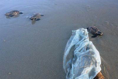 Projeto Tartarugas do Delta solta de 80 filhotes de tartaruga em Luís Correia