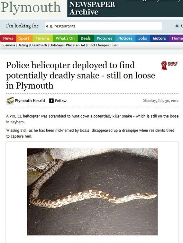 Polícia britânica usa helicóptero na tentativa de achar cobra