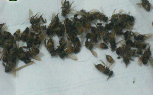2 ficam em estado grave após ataque de abelhas em José de Freitas
