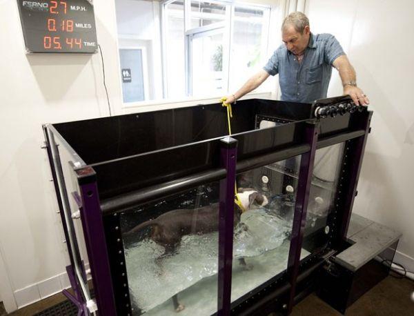 Esteira aquática para cães é atração de spa canino nos EUA