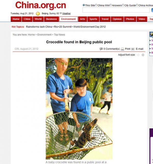Filhote de crocodilo é achado em piscina pública na China