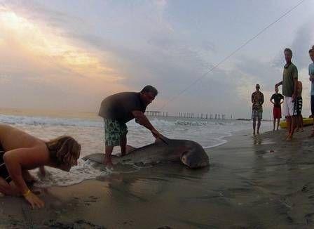 Homem pesca tubarão de dois metros nos EUA, usando linha e anzol