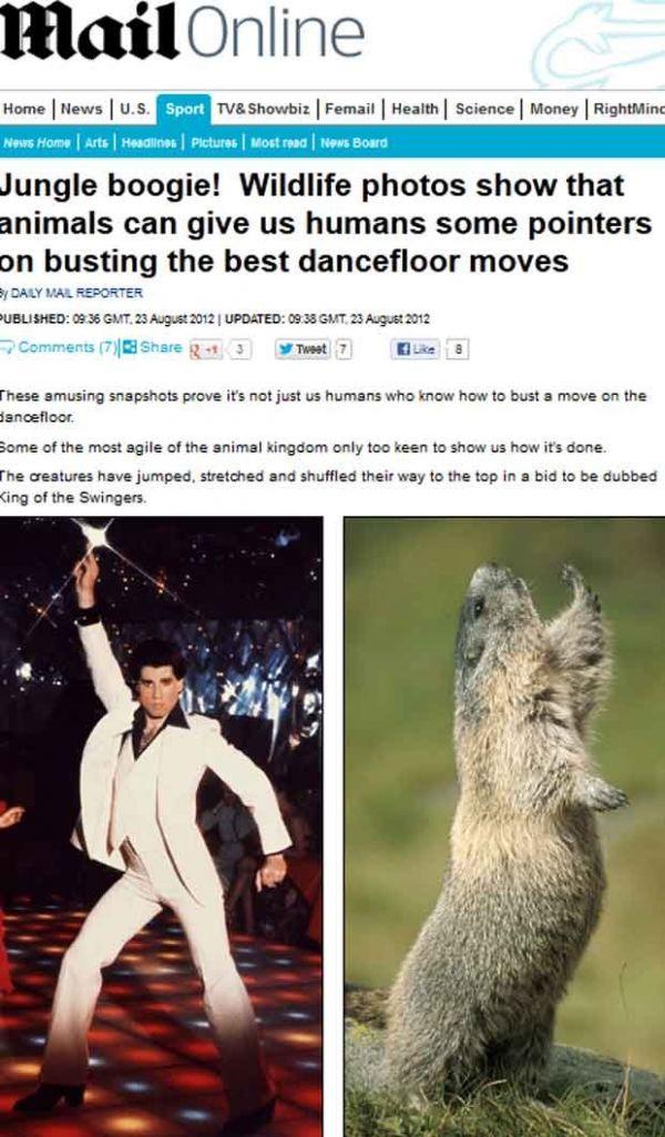 Marmota é flagrada dançando como ator John Travolta, diz jornal
