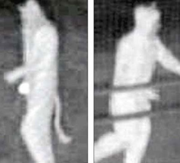 Homens fantasiados de gato são acusados de roubo
