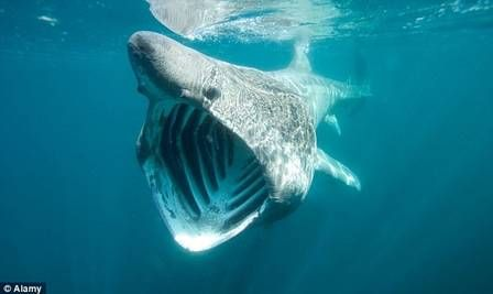 Crianças entram em pânico ao ver tubarões cercarem seu caiaque