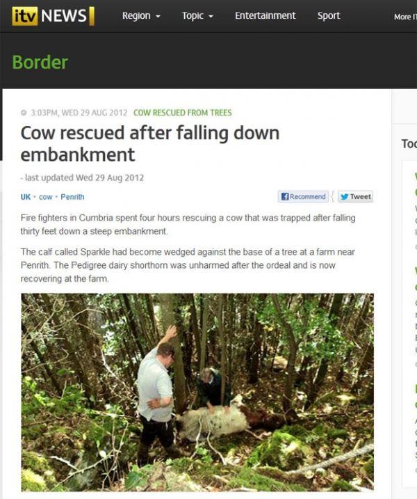 Vaca é resgatada após cair de encosta e ficar presa em árvore