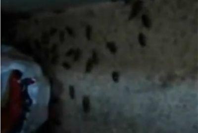 Saiu no site Uol: Baratas infestam a cozinha da Irmão Guido, onde falta água para presos