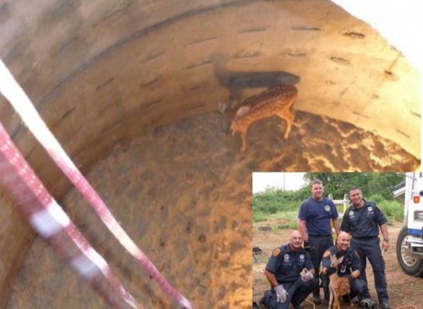 Veado é resgatado após cair em poço de seis metros nos EUA
