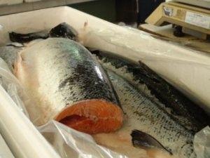 Comer peixe e frutos do mar melhora leitura de crianças, revela estudo