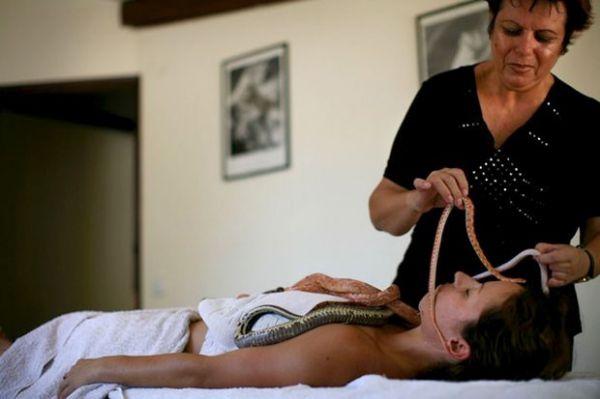 Massagem relaxante de  spa em Israel põe cobras sobre corpo nu e rosto de clientes