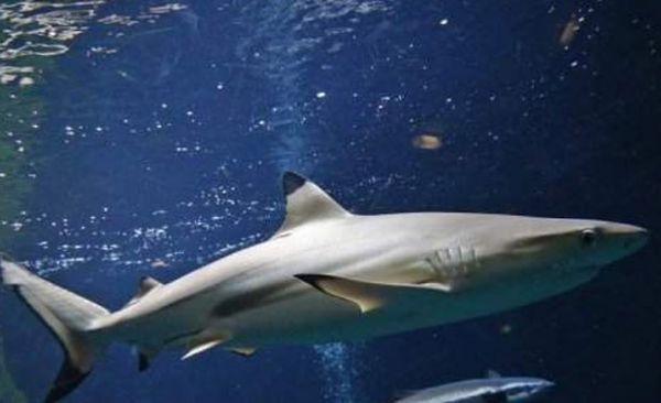 Pescador é salvo por tubarão após passar 15 semanas no mar