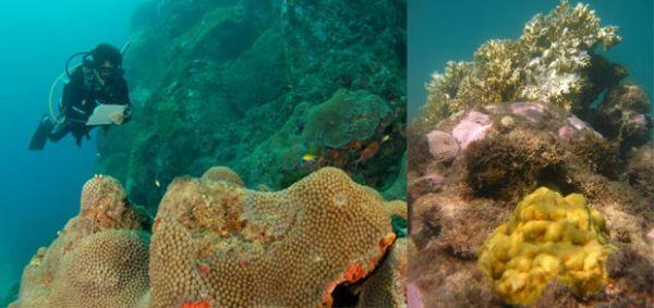 Litoral do país perdeu 80% de recifes de corais em 50 anos, diz estudo