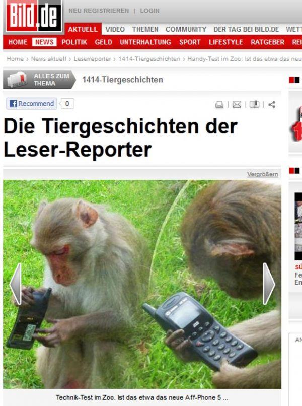 Macaco é flagrado com celular
