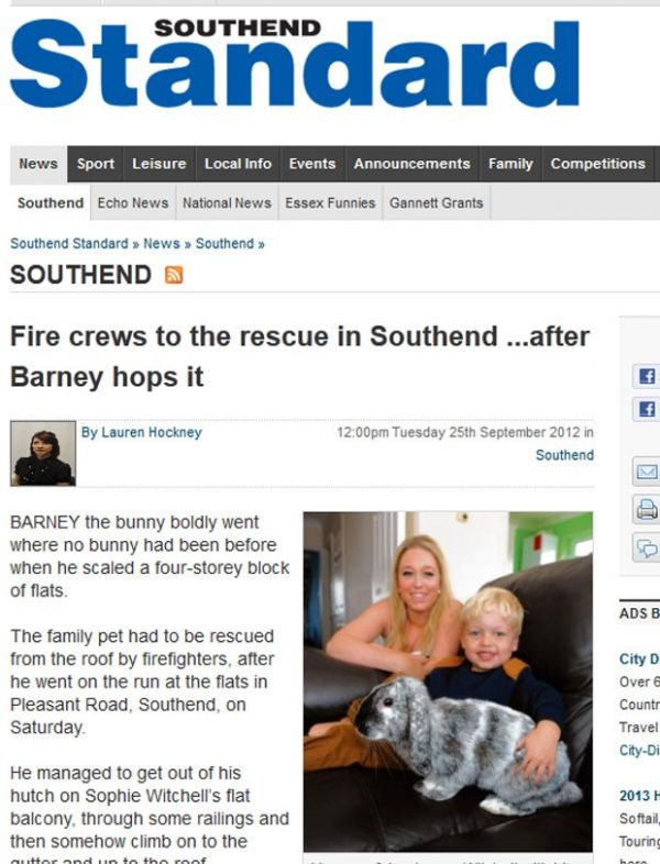 Coelho é resgatado após subir no telhado de prédio no Reino Unido