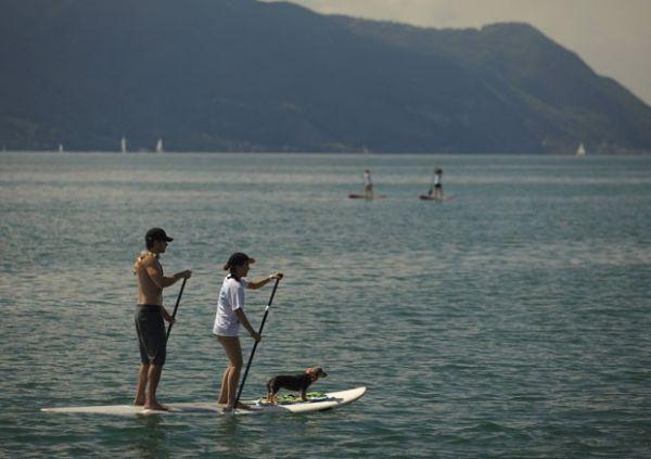 Casal passeia com animal de estimação em prancha na Suíça