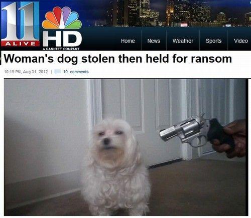 Bandidos mandam foto em que apontam arma para cão sequestrado