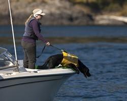Cão rastreia baleias pelo cheiro das fezes e ajuda a preservá-las nos EUA