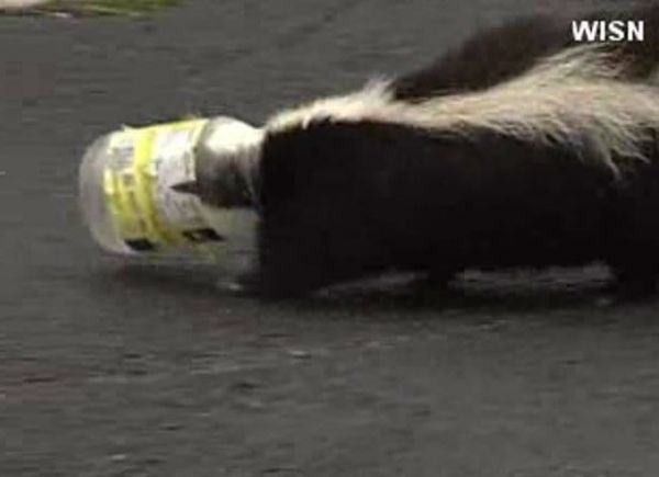 Cangambá é achado com frasco de plástico entalado na cabeça