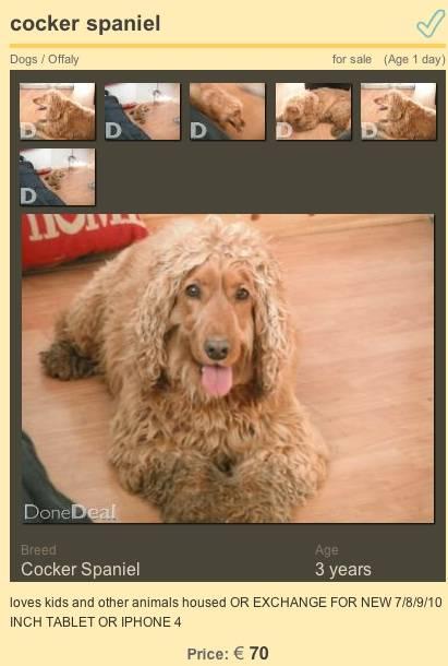 Homem oferece seu cão em troca de iPhone 4 ou Tablet na Irlanda