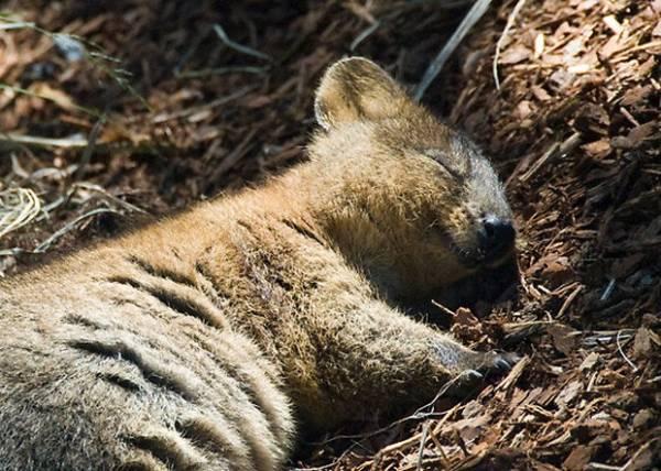Site reúne fotos de marsupial eleito