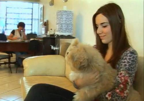 Babá de cachorro fatura R$ 8 mil por mês em São Paulo