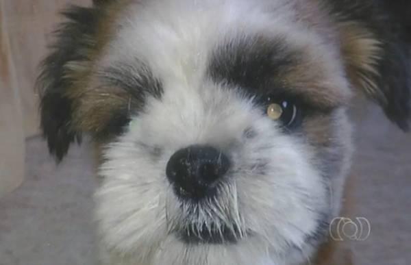 Ladrões arrombam portão para levar cão de raça em GO; vira-lata é deixado