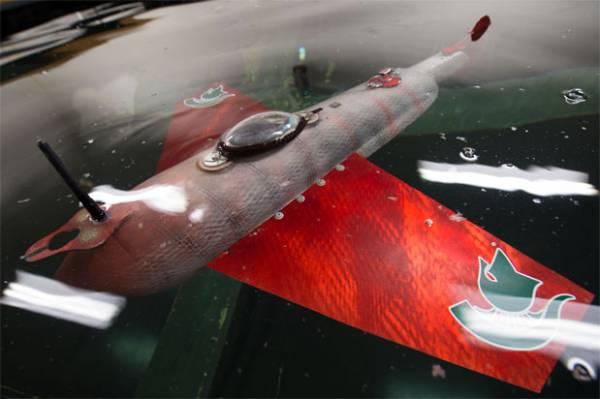 Criado peixe robótico que analisa se água de rios estão limpas