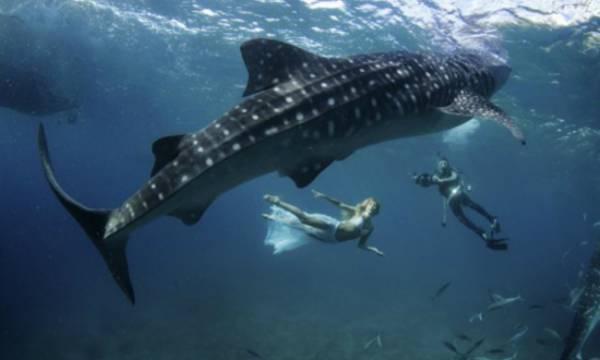 Modelos se arriscam e nadam com tubarões em ensaio nas Filipinas