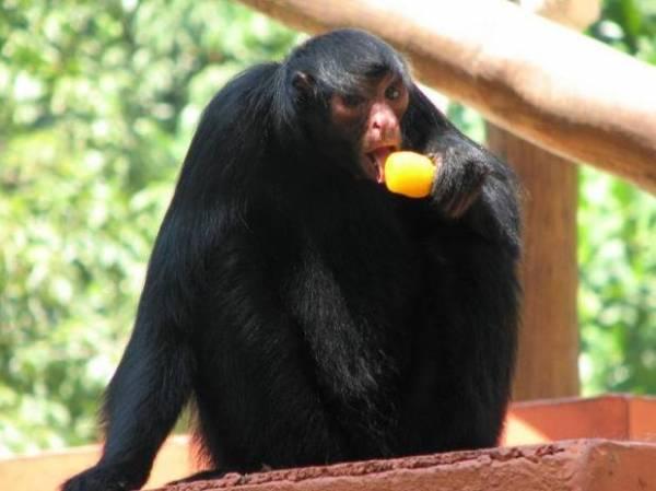 Sob calor, zoo oferece sorvete de carne e picolé aos animais no Rio