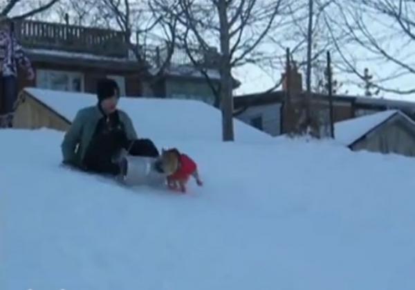 Vídeo mostra cão