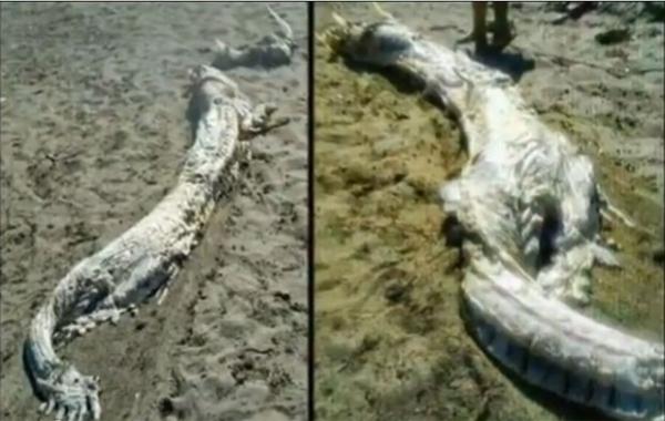 Peritos não conseguem identificar criatura com chifres achada em praia