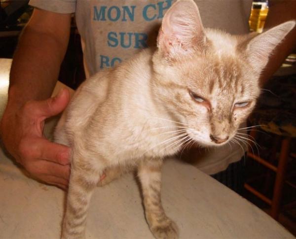 Casal reencontra gata que estava sumida havia dois anos nos EUA