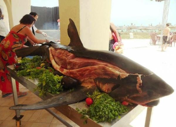 Tubarão servido inteiro em resort na Tunísia cria polêmica na web