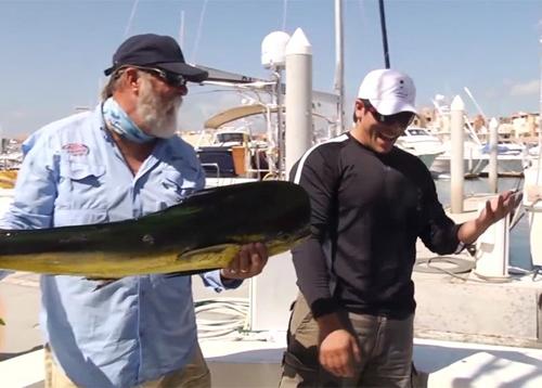 Leão-marinho esperto rouba um peixe