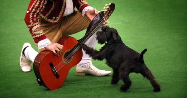 Cão toca violão durante campeonato de