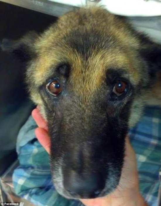 Cão é resgatado após ficar 4 anos acorrentado recebendo maus-tratos