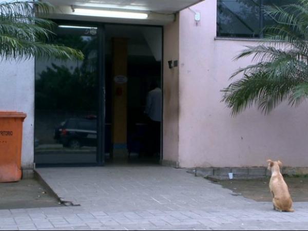 Cadela segue dono preso e espera há mais de 12 horas em delegacia no ES