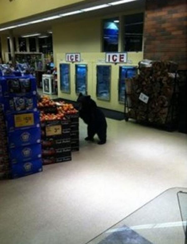 Funcionária flagra urso devorando maçãs após invadir mercado