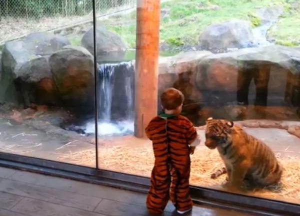 Vídeo de bebê fantasiado de tigre brincando com tigre vira hit na web