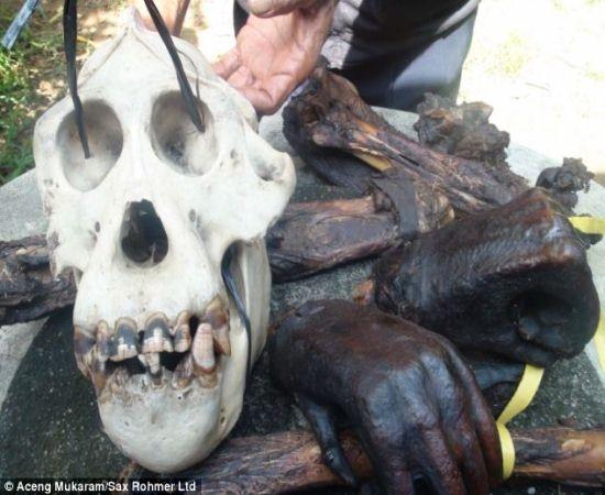 Aldeões em Bornéu chocaram o mundo ao cozinhar e comer um orangotango