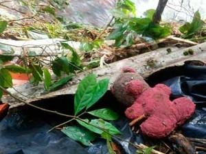 Criança segue desaparecida no RS após queda de estufa com temporal