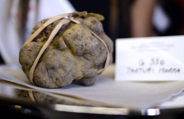 Duas trufas de 950 gramas são leiloadas por R$ 282 mil na Itália