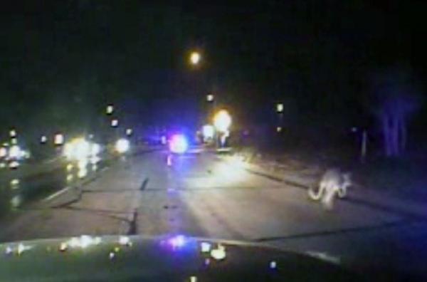 Polícia dos EUA fica incrédula ao receber alerta de canguru à solta