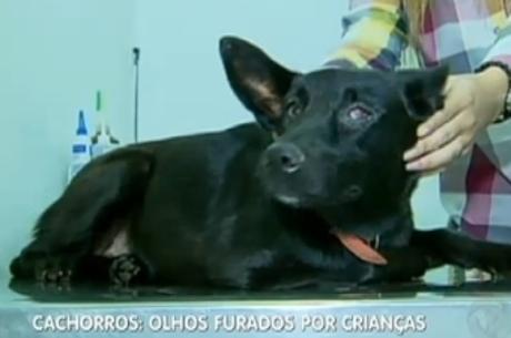 Crian軋s s縊 suspeitas de furar olhos de cachorros em Goi疽