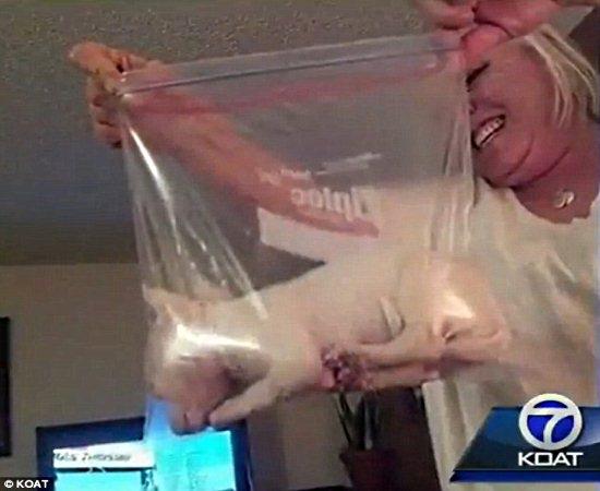 M綟 e filho s縊 presos por crueldade ap prenderem cachorro rec駑-nascido em saco pl疽tico