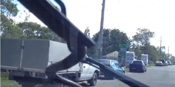 Cobra surge em para-brisa de carro em movimento causa pânico nos passageiros