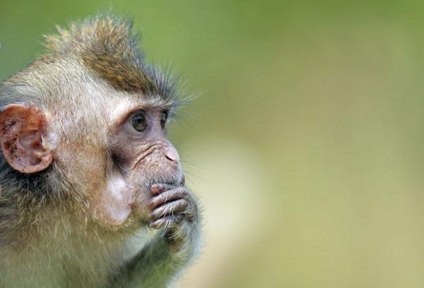 Macaco é fotografado em momento