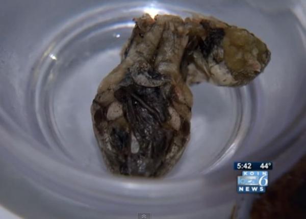 Americana encontra cabe軋 de cobra em embalagem de vagem