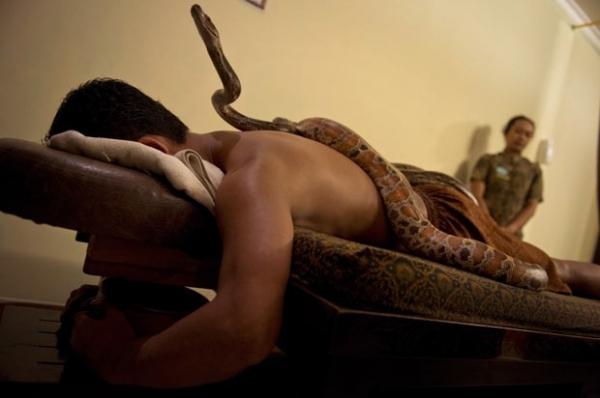 Massagem corporal com cobras atrai estrangeiros a spa na Indonésia
